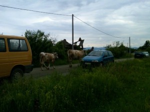 In the village of Kevljani, near Prijedor, Bosnia. Cows, shelled-out ruins of homes, and the laughter of children behind you.